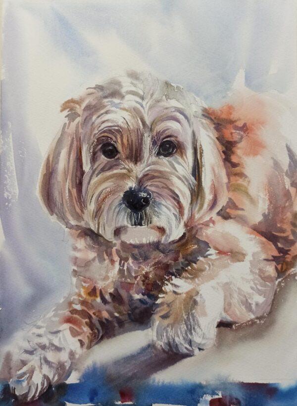 Oliver. Pet Portrait original watercolour painting.
